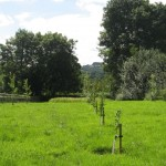 orchard & wf meadow