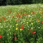 wf meadow 1