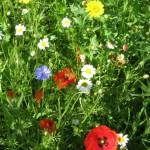 wf meadow 2