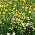 wf meadow 3