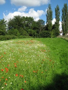 wf meadow & orchard